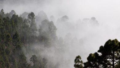 Photo of «Желтое» предупреждение: 28 октября ожидается туман на западе Украины