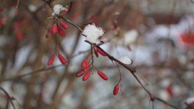 Photo of Погода в Украине 21 ноября: пройдут небольшие дожди и снег