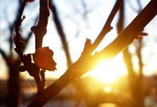 Photo of Погода на 15 ноября: что обещают синоптики