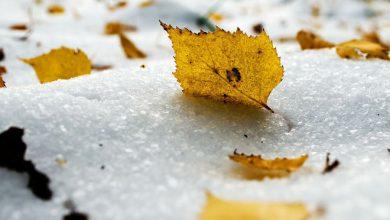 Photo of Погода в Украине 22 ноября: в ряде областей пройдет небольшой снег