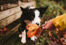 Photo of 20 ноября: праздник, приметы и суеверия